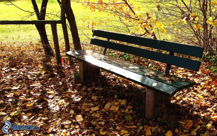 banco, hojas de otoño