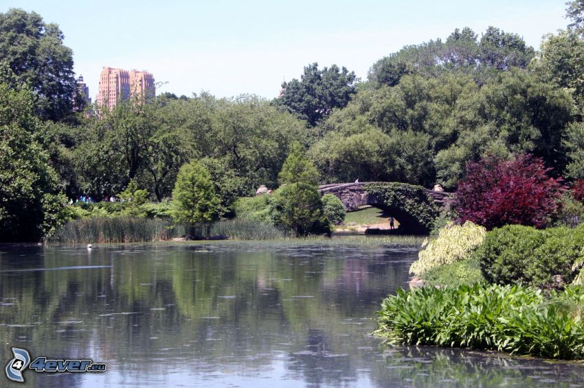 Central Park, lago