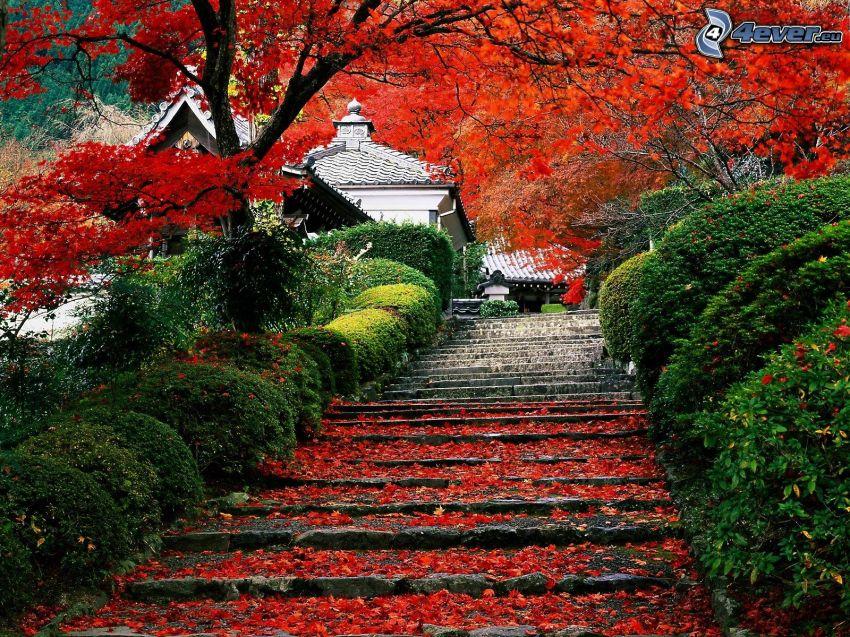 escalera, hojas rojas, árboles coloridos del otoño, parque, casas