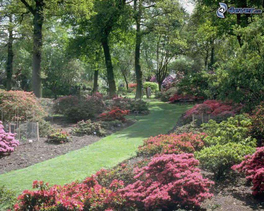jardín botánico, césped, acera, parque