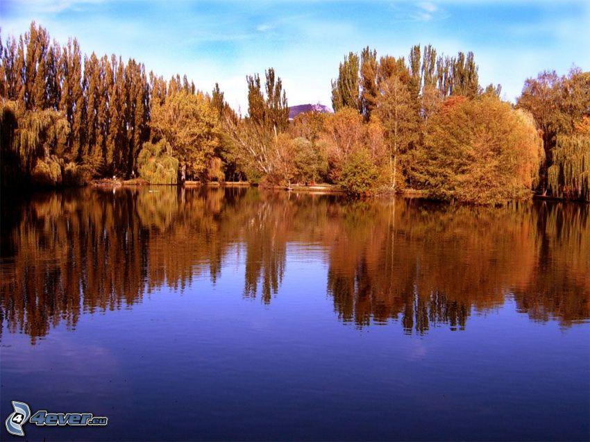 lago, parque, árboles, Nitra