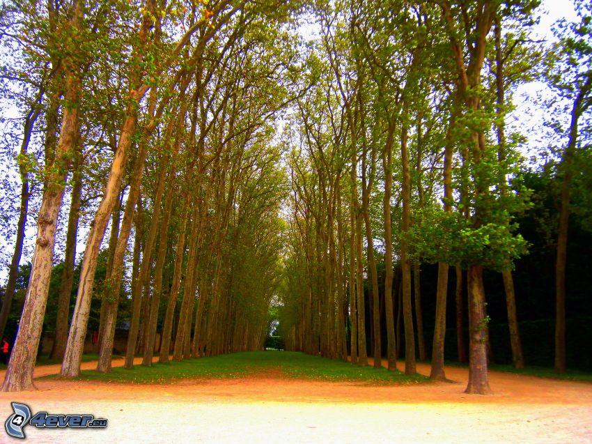 líneas de árboles, parque