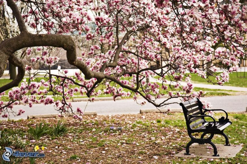 magnolia, banco