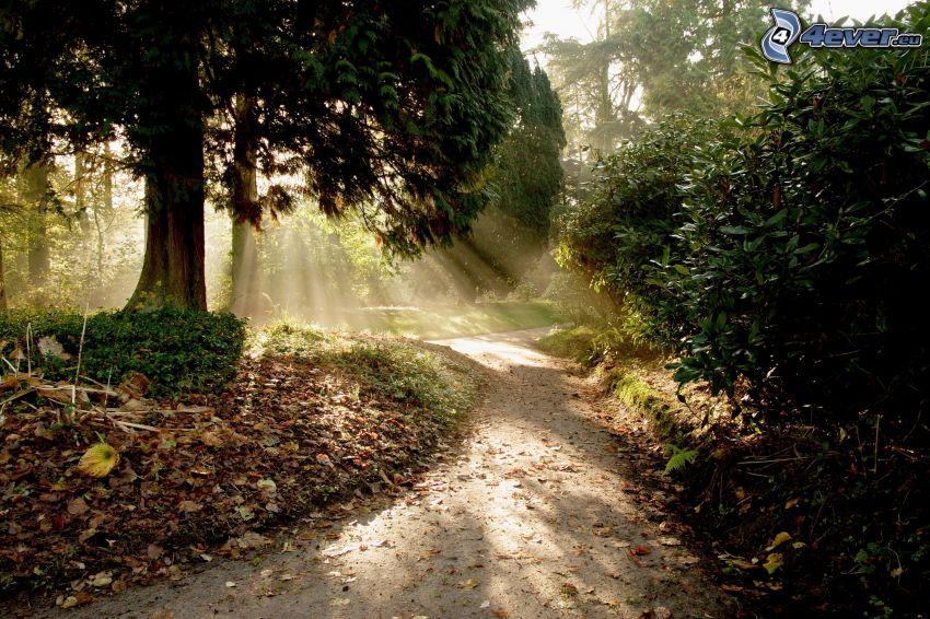 parque, acera, árboles, hojas secas