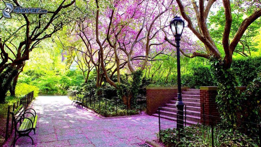 parque, acera, árboles, lámpara de calle