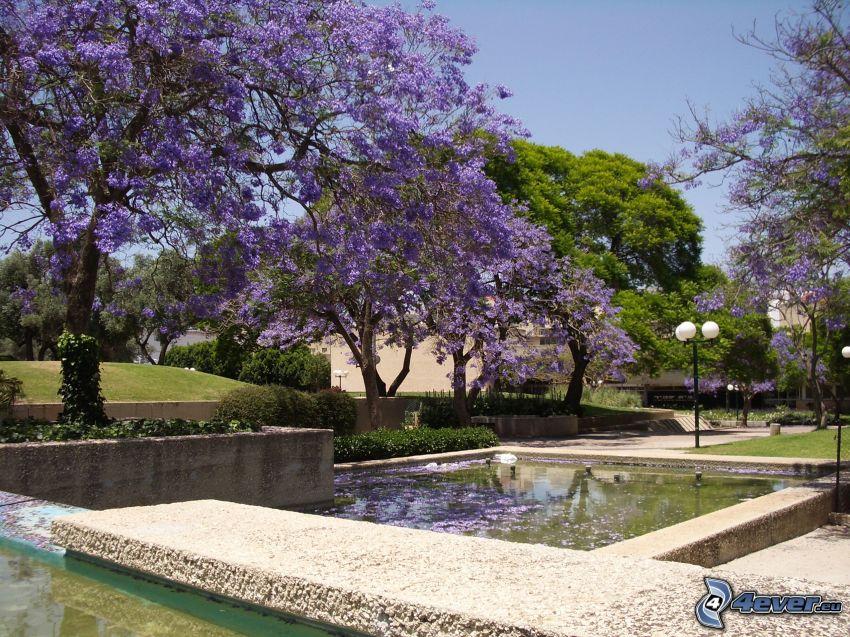 parque, árboles en flor, flores de coolor violeta