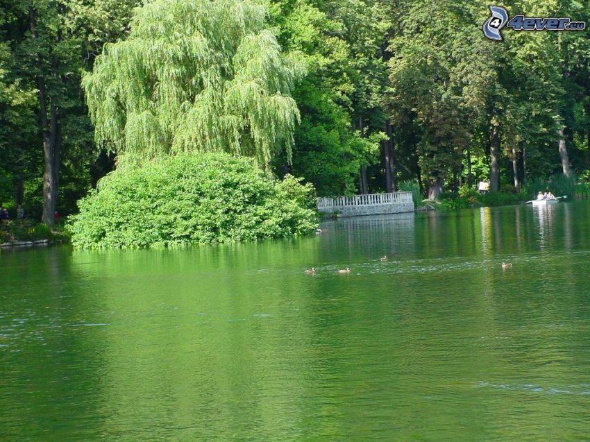 parque, lago, Rajecké Teplice
