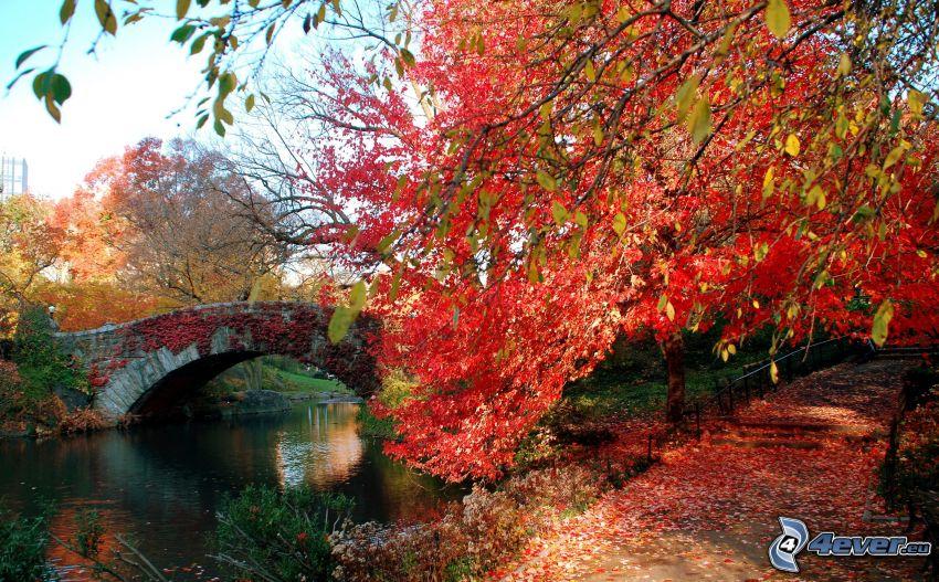 parque, puente de piedra, árbol otoñal, acera