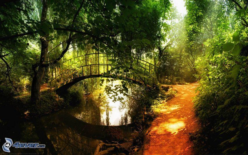 parque, puente peatonal, acera, río, verde