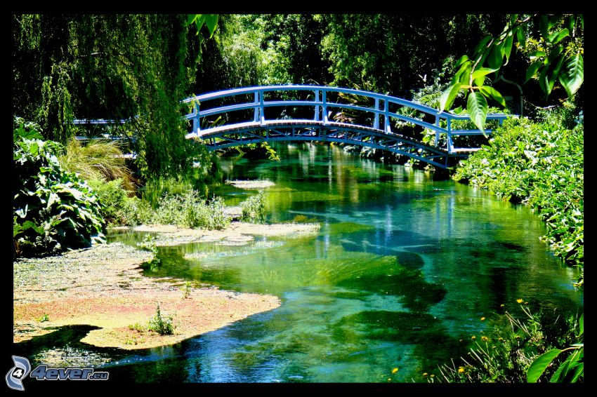 puente peatonal, río, verde