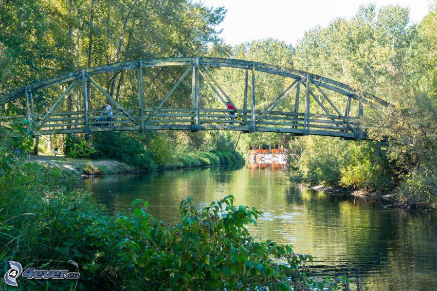 Bothell Bridge, río, bosque