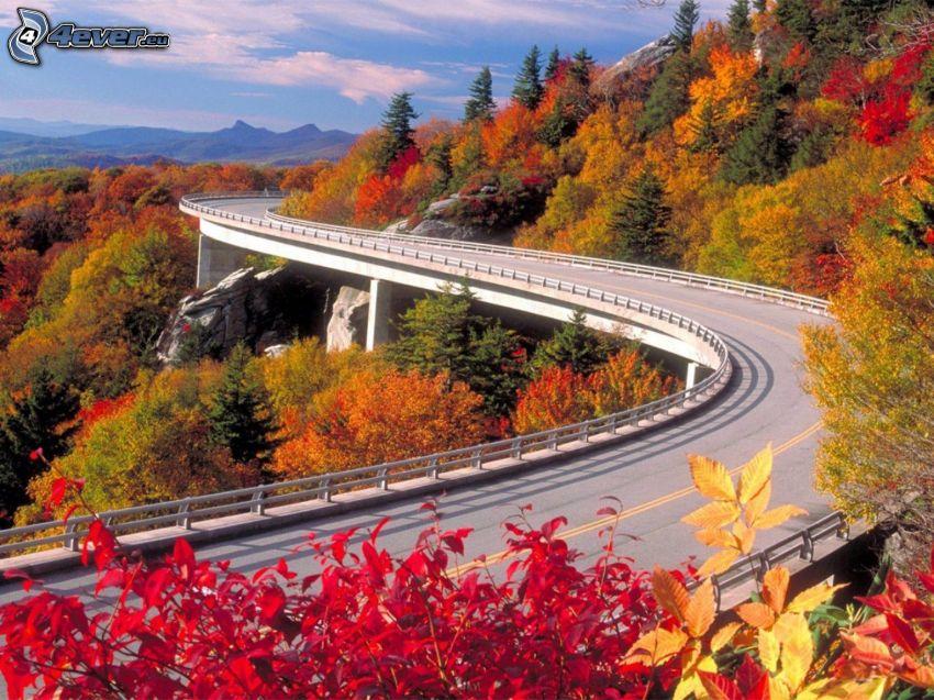 puente, curva, camino, árboles de colores