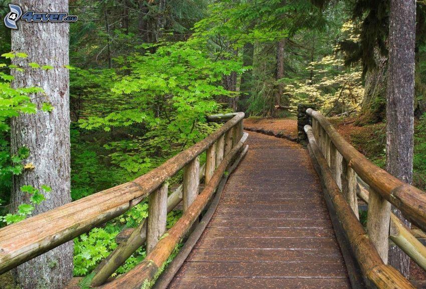puente de madera en el bosque