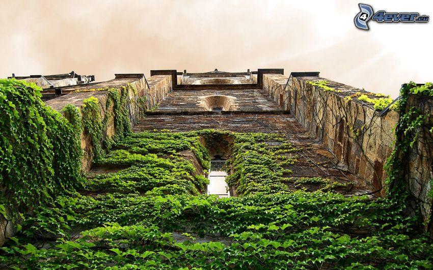 torre, hiedra, hojas verdes