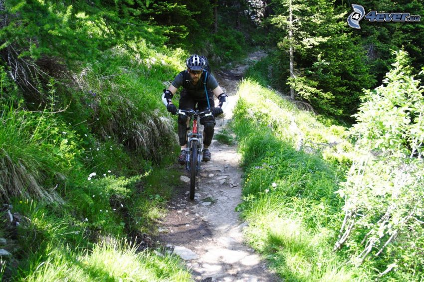 mountainbiking, Alpes, ciclismo, bosque