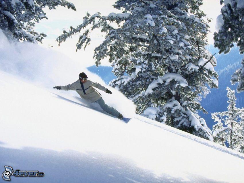 snowbordista, declive, árboles nevados