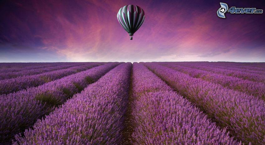 globo de aire caliente, campo de lavanda, cielo púrpura