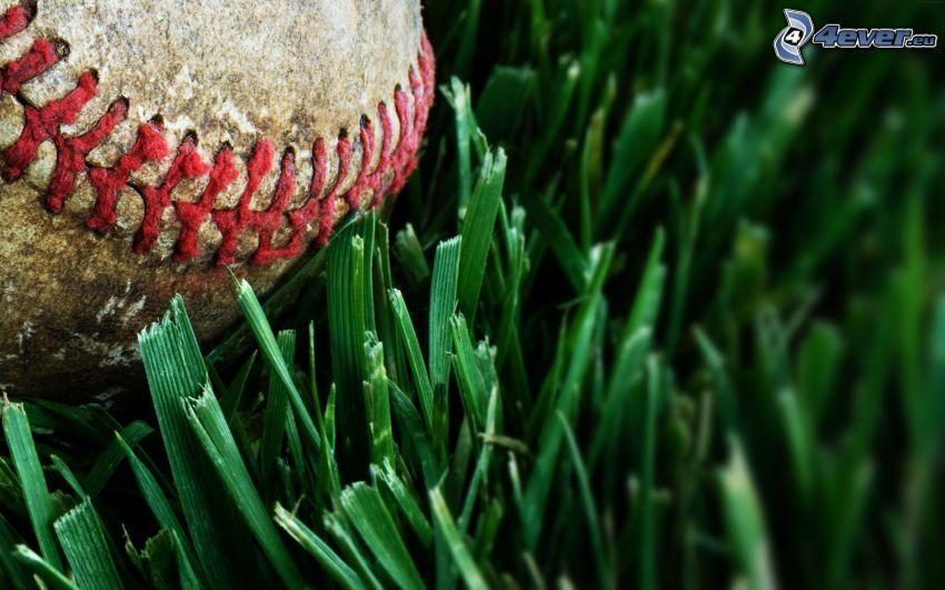 pelota de béisbol, hierba