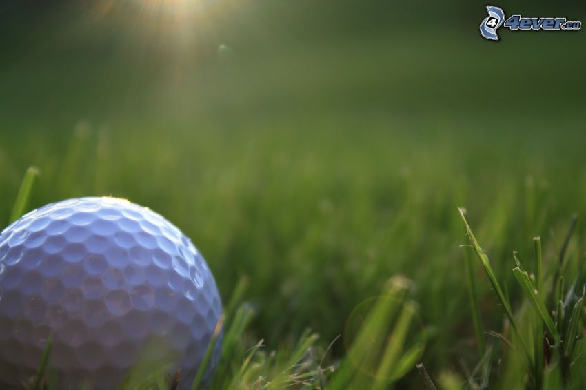 pelota de golf, hierba