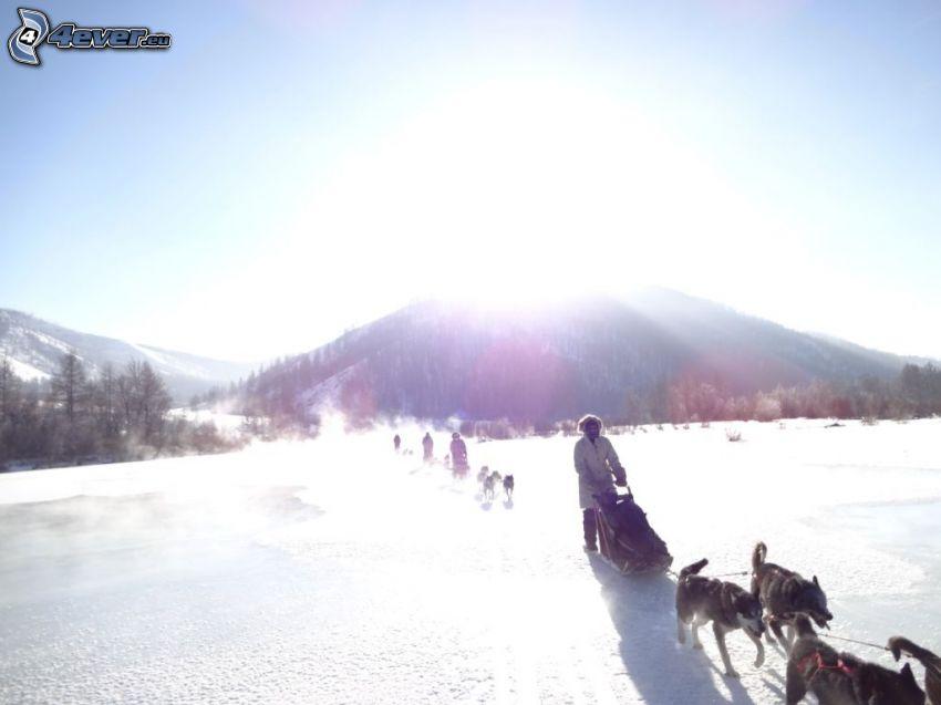 tirón de perros, sol, colina, nieve