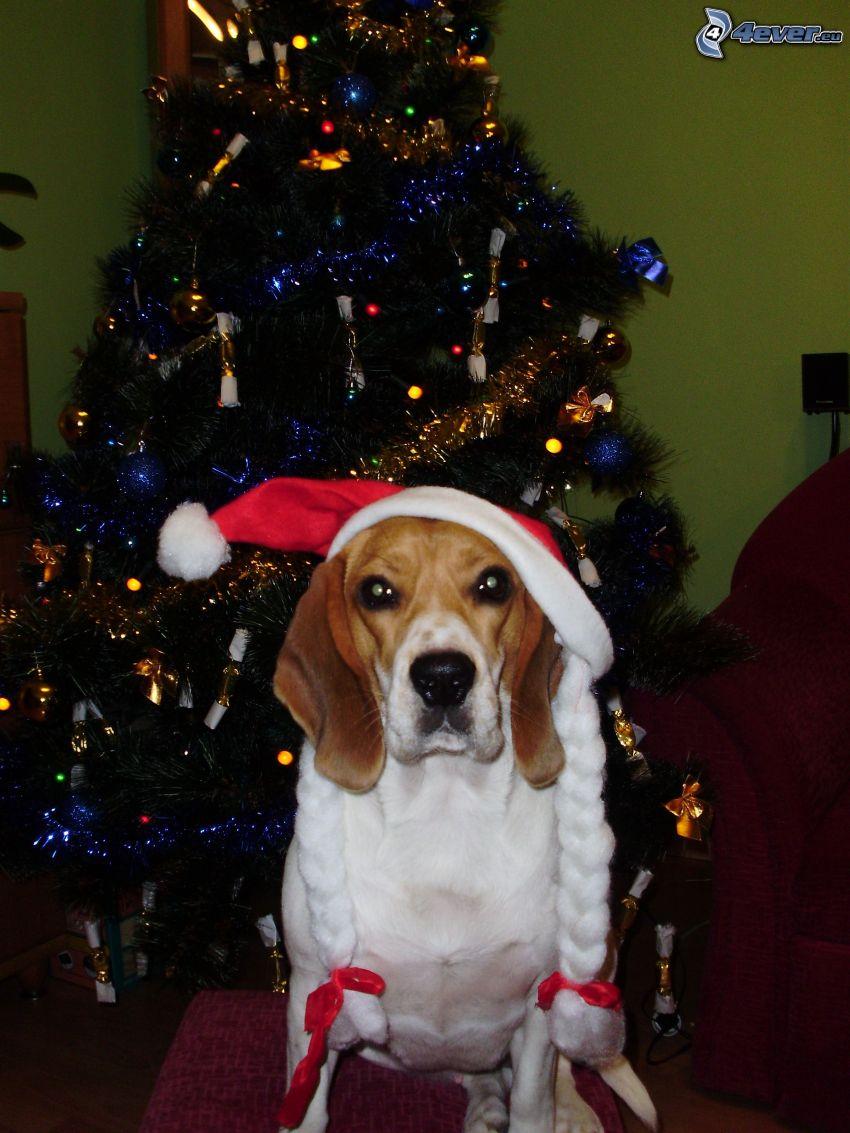 perro navideño, árbol de Navidad