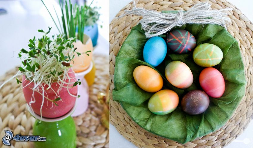 huevos de pascua, planta
