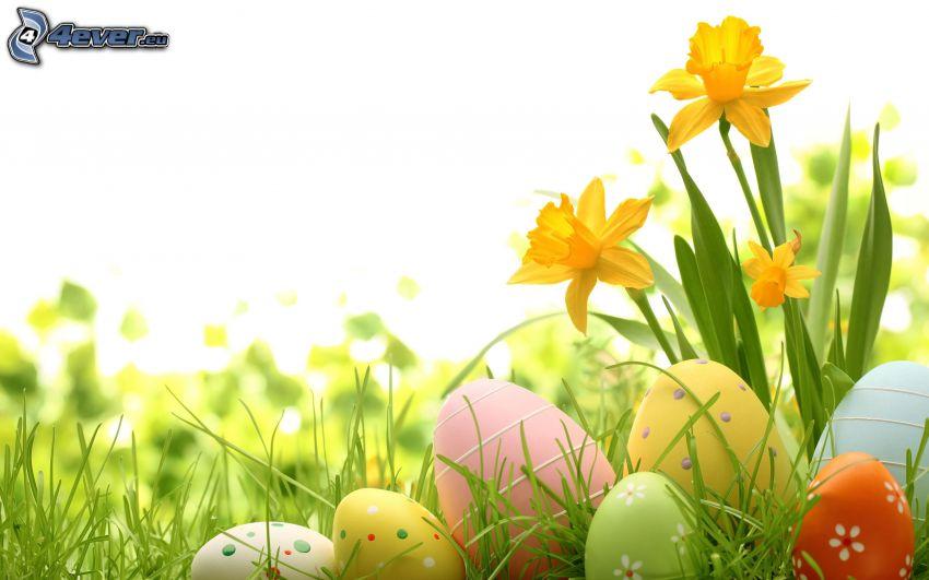 huevos de pascua en hierba, narcisos