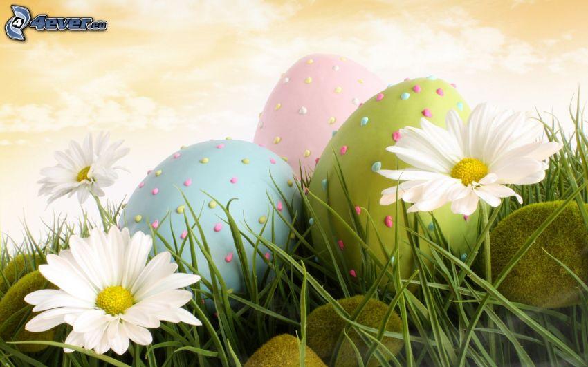 huevos pintados, huevo de Pascua, margaritas, hierba