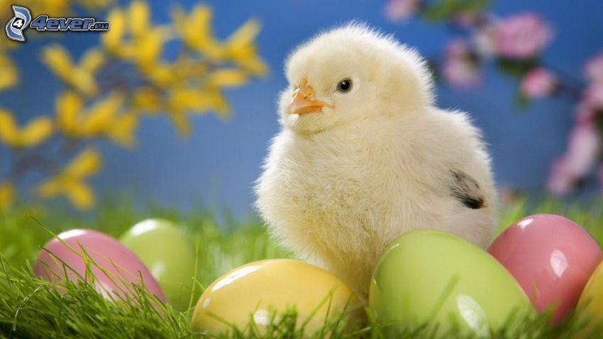 pollito, huevos de pascua