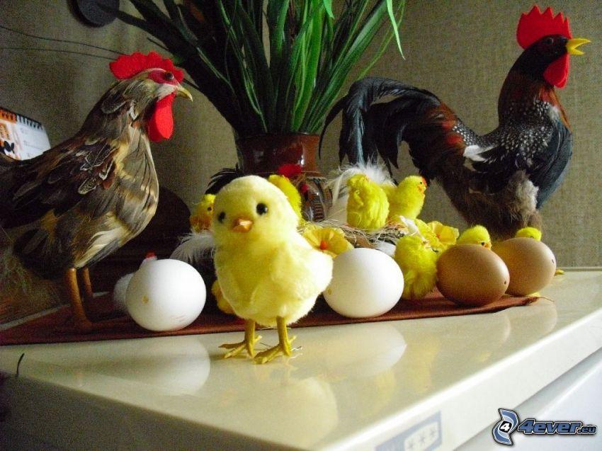 pollitos, gallo