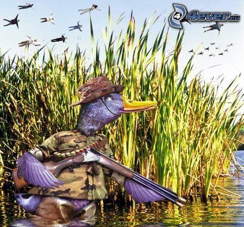 cazador, pato, parodia