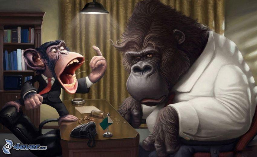 monos, chimpancé, gorila, ira