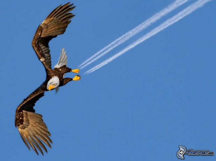 águila, motores de coriente, marcas de condensación