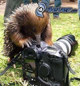 animal, cámara
