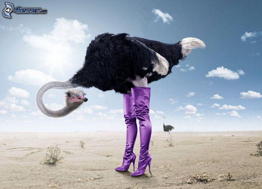 avestruz, botas