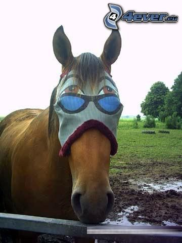 caballo, máscara, ojos