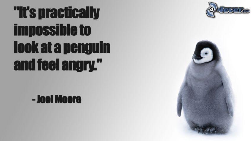 cachorro de pingüino, ira, citar