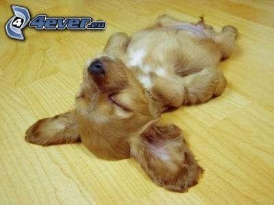 cachorro durmiendo, descanso