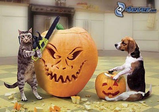 Calabazas de Halloween, gato, beagle, calabaza
