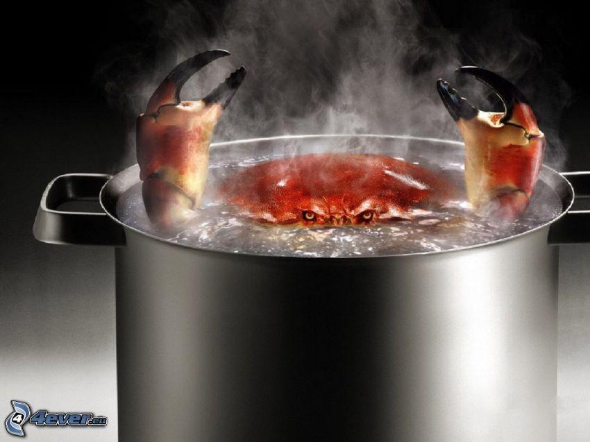 cangrejo, sopa, olla, agua, vapor