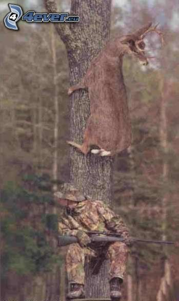 cazador, corza
