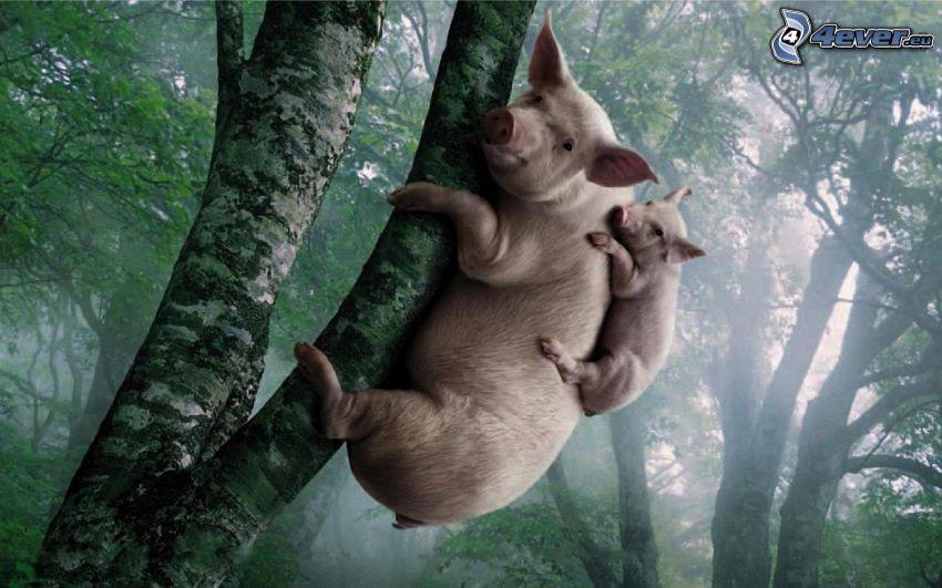 cochinos, cachorro, árbol