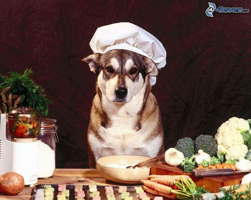 cocinero, perro