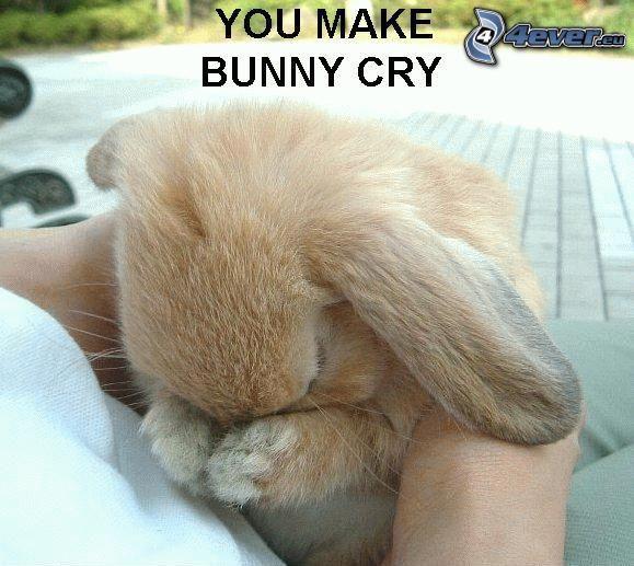 conejo, llanto