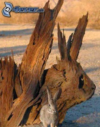 conejo, tronco seco