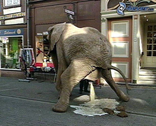elefante, retrete, calle
