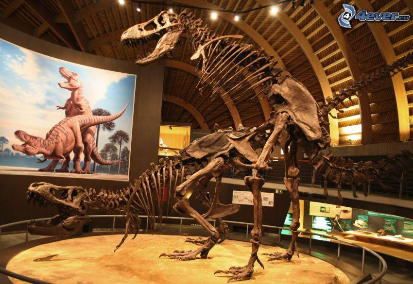 esqueletos, dinosaurio, sex, museo