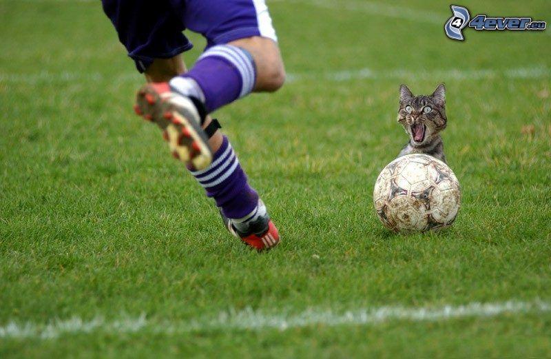 futbolista, gato asustado