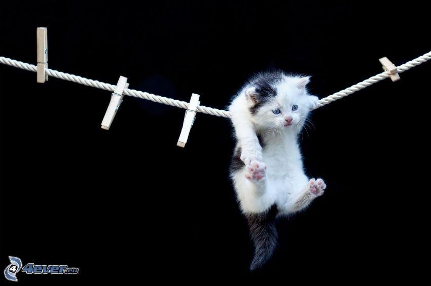gatito, cable, clavijas en una cuerda