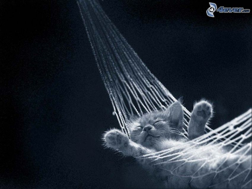 gatito, tumbarse en una red